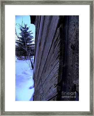 Old And Young Spruce Framed Print by The Stone Age