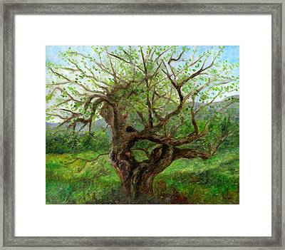 Old Apple Tree Framed Print