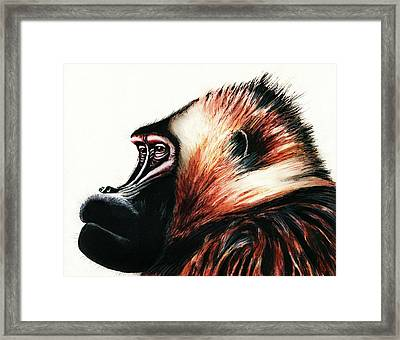 Old Baboon Animal Art Drawing Framed Print