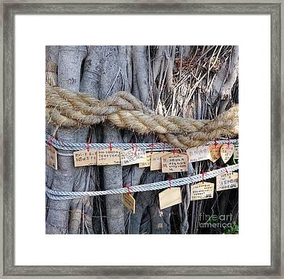 Old Banyan Wishing Tree Framed Print by Yali Shi