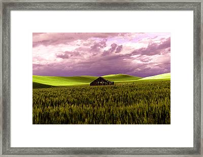 Old Barn In A Pa-louse Wheat Field  Framed Print