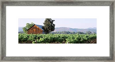 Old Barn In A Vineyard, Napa Valley Framed Print by Panoramic Images