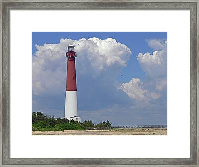 Old Barney With Gulls Framed Print by Tom LoPresti