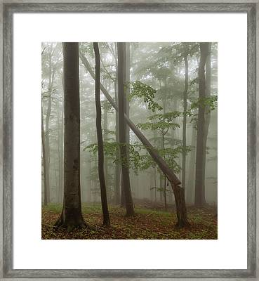 Old Beech Forest Framed Print by Evgeni Dinev