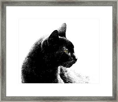Framed Print featuring the photograph Old Black Cat Two by Lila Fisher-Wenzel