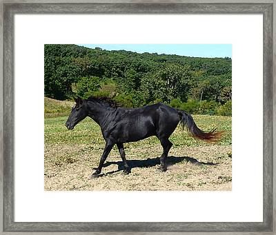 Framed Print featuring the digital art Old Black Horse Running by Jana Russon