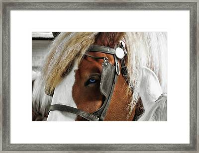 Old Blue Eyes Savannah Framed Print by JAMART Photography