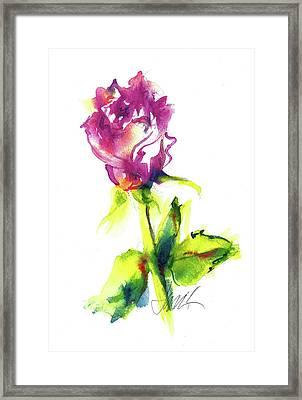 Old Blush - Rose Framed Print