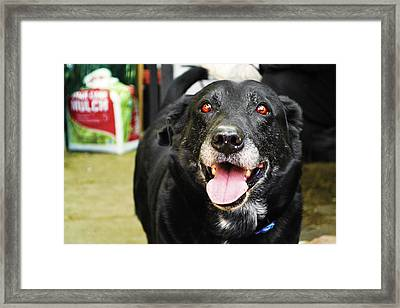 Framed Print featuring the photograph Old Boy by Naomi Burgess
