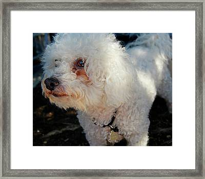 Old Buddy Framed Print by JAMART Photography