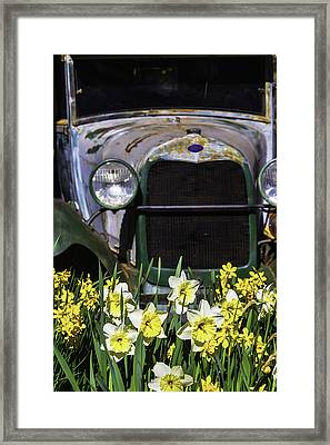 Old Car And Daffodils Framed Print by Garry Gay