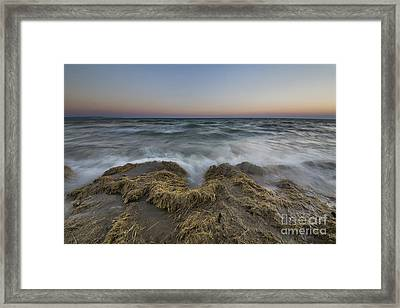 Old Cattails On The Beach Framed Print by Twenty Two North Photography