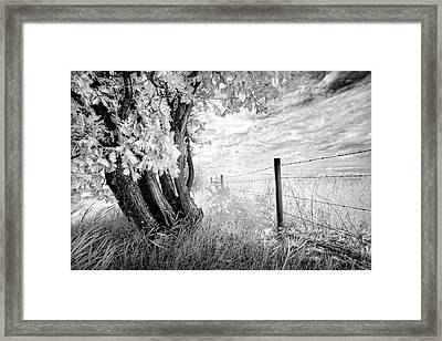 Old Cedar And Barbed Wire Framed Print