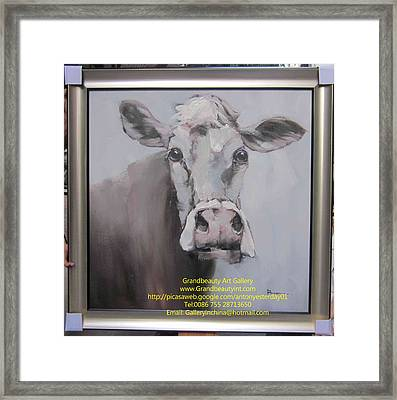 Old Cow Framed Print by Darren