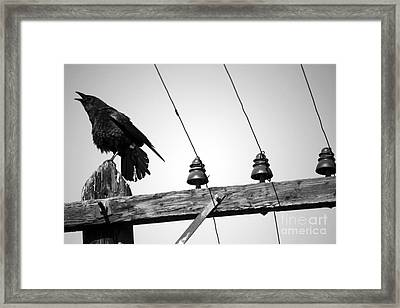 Old Crow Framed Print