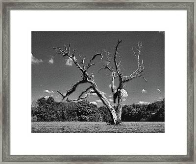 Old Dead Tree Framed Print