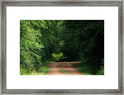 Framed Print featuring the photograph Old Dirt Road by Shelby Young