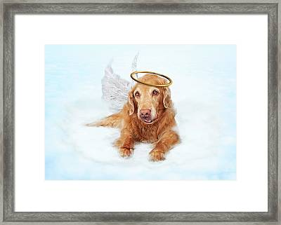 Old Dog Angel On Cloud In Heaven Framed Print by Susan Schmitz