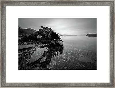 Old Driftwood Framed Print