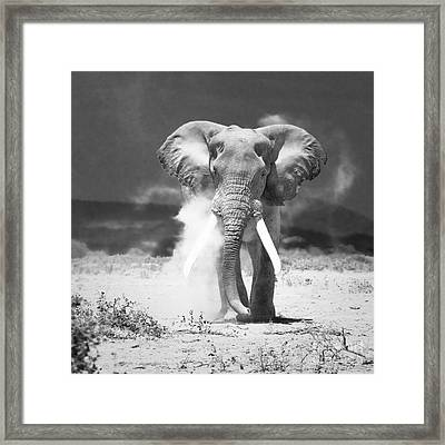 Old Elephant At Amboseli National Park Kenya Framed Print
