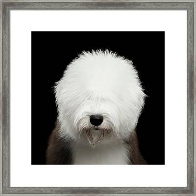 Old English Sheepdog Bobtail Framed Print