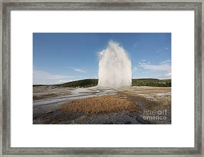 Old Faithful Framed Print by Juli Scalzi