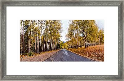Old Fall River Road With Changing Aspens - Rocky Mountain National Park - Estes Park Colorado Framed Print by Silvio Ligutti