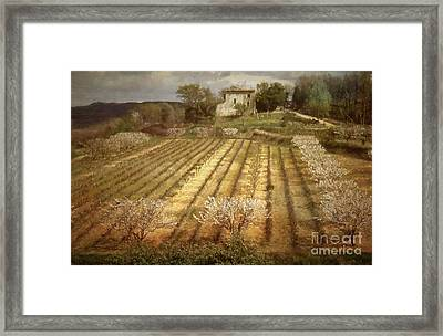 Old Farm House With Almond Trees Framed Print by Robert Brown