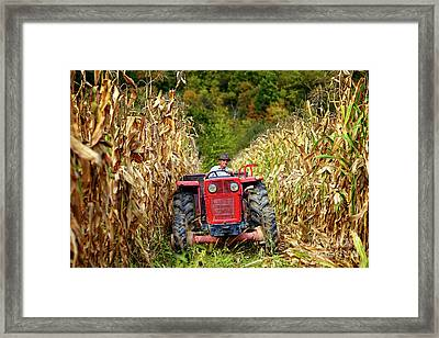 Old Farmer Driving The Tractor In The Cornfield Framed Print