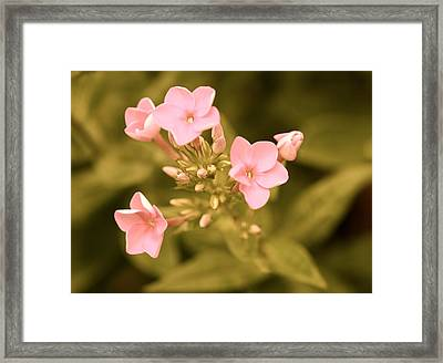 Framed Print featuring the photograph Old Fashioned Spring by Corinne Rhode