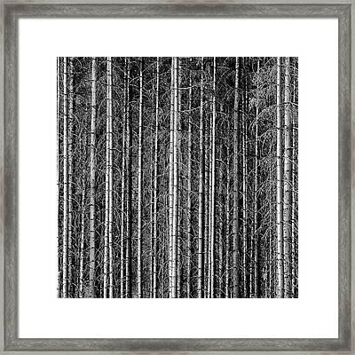 Old Forrest Framed Print by Kristian Westgård