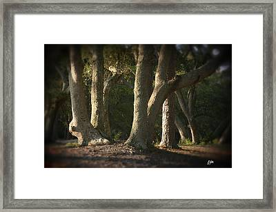 Framed Print featuring the photograph Old Friends Meet In The Woods by Phil Mancuso