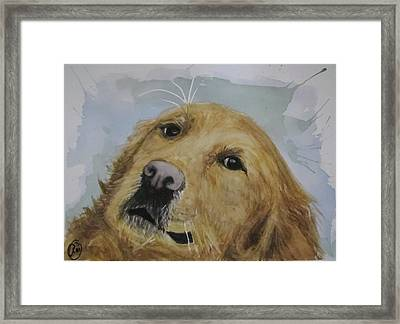 Old Golden Retriver Framed Print