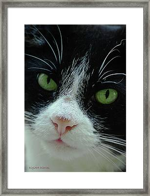 Old Green Eyes Framed Print by DigiArt Diaries by Vicky B Fuller