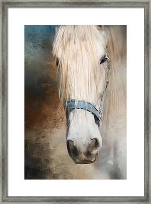 Framed Print featuring the photograph Old Grey by Robin-Lee Vieira