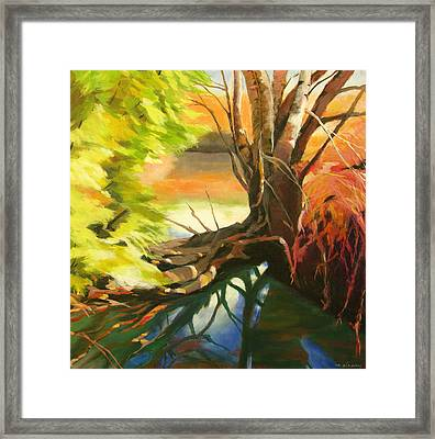 Old Growth At Fanno Creek Framed Print by Melody Cleary