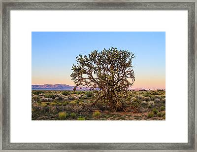 Old Growth Cholla Cactus View 2 Framed Print
