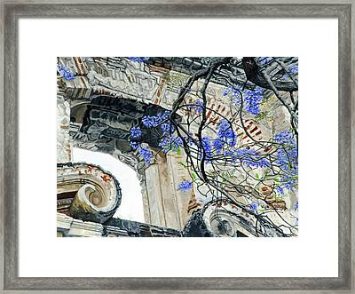Old Growth Wisteria Framed Print