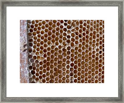 Old Honey Comb Bee Hive  Framed Print by Kathy Daxon