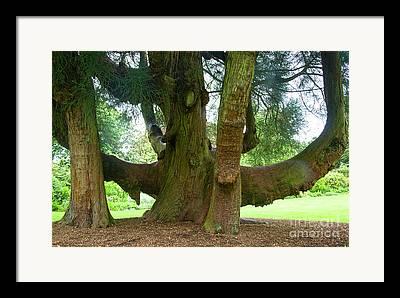 Gardenscapes Photographs Framed Prints