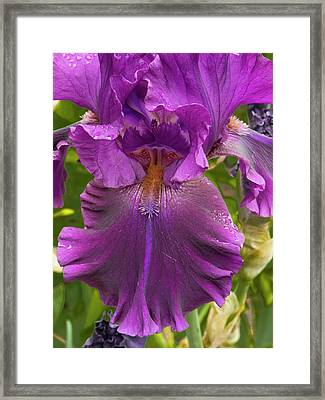 Old Lady Iris Framed Print by Jean Noren