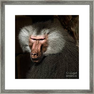 Framed Print featuring the photograph Old Male by Joerg Lingnau