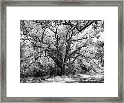 Old Man In Spring Framed Print by JoAnn Wheeler