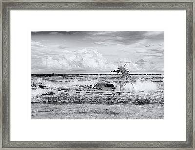 Framed Print featuring the photograph Old Man In The Sea by Carolyn Dalessandro