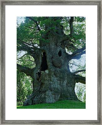 Old Man Tree Framed Print