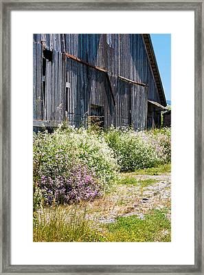 Old Milking Barn Framed Print