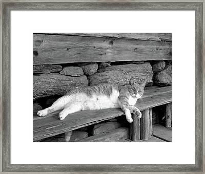 Framed Print featuring the photograph Old Mill Cat by Sandi OReilly