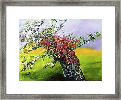 Old Nantucket Tree Framed Print