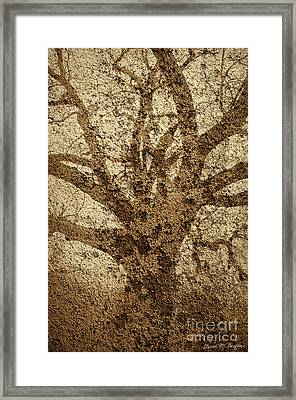 Old Oak And Textured Wall Montage Framed Print by Dave Gordon