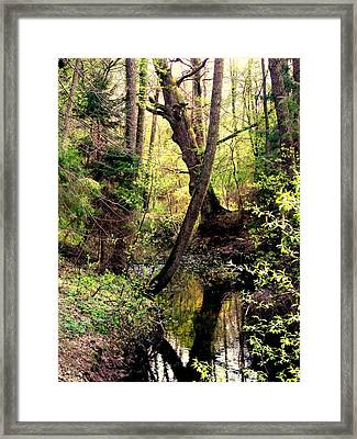 Old Oak Framed Print